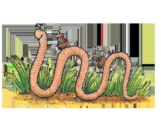Superworm Class